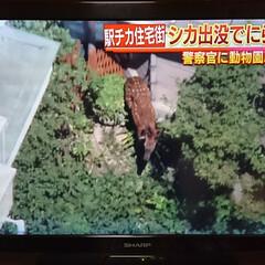 鹿/ヘリコプター/ニュース 午前中、ヘリコプターがバタバタ🏠の上を旋…(5枚目)