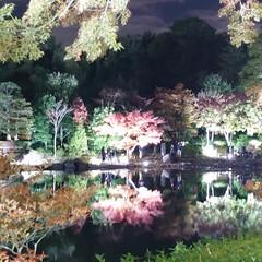 癒やし/弾丸/ライトアップ/夜散歩/紅葉/いつもの公園 いつもの公園《秋の夜散歩》へ行ってきまし…