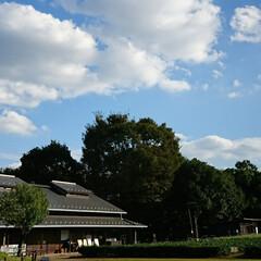 いつもの公園/いわし雲/コスモス 明日からの連休 台風の影響で雨模様の予報…