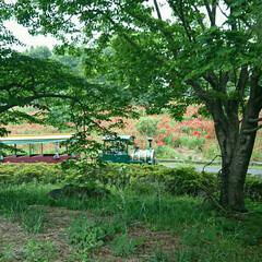 園内/公園/おでかけ 公園内を走るトレインバス 子どもや年配の…