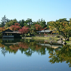 水面に映る紅葉/紅葉/公園/秋 昨日、続きの風景です 水面に映る紅葉はど…