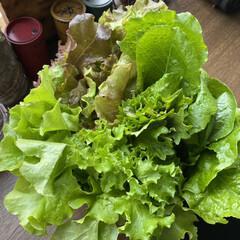 自家栽培/餃子/コロッケ/サラダ/採れたて 昨日の夜は収穫した野菜🥗 コロッケ! 餃…(2枚目)