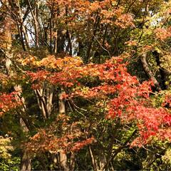 イルミネーション/クリスマスツリー/紅葉/豆腐料理のお店/梅の花/おでかけ 昨日は家族で佐賀までお出かけ☺️ 梅の花…(7枚目)