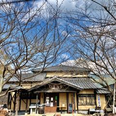 イルミネーション/クリスマスツリー/紅葉/豆腐料理のお店/梅の花/おでかけ 昨日は家族で佐賀までお出かけ☺️ 梅の花…(2枚目)