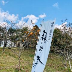 イルミネーション/クリスマスツリー/紅葉/豆腐料理のお店/梅の花/おでかけ 昨日は家族で佐賀までお出かけ☺️ 梅の花…(5枚目)