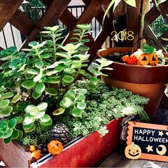 ハロウィン/雑貨/100均/ハンドメイド お庭もちょっとだけ🎃 サボテンの周りに小…