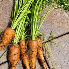 採れたてお野菜/自家栽培/家庭菜園/大葉/ロメインレタス/おうちごはん/... 昨日の夜ごはん😊 🥗! ロメインレタスと…(3枚目)