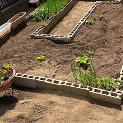 お庭/種まき/春のフォト投稿キャンペーン/DIY/住まい おはようございます😆 ここ数日…お庭をい…