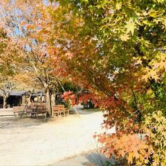 イルミネーション/クリスマスツリー/紅葉/豆腐料理のお店/梅の花/おでかけ 昨日は家族で佐賀までお出かけ☺️ 梅の花…