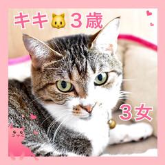 ねこむすめ/うちの子/ネコ/🍘/ねこ/猫 うちの子❤️キキ❤️3歳❤️元お外のねこ…