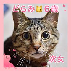 ねこむすめ/うちの子/ネコ/🍘/ねこ/猫 うちの子❤️どらみ❤️6歳❤️元お外のね…