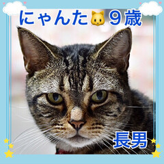 ねこむすこ/うちの子/ネコ/🍘/ねこ/猫 うちの子❤️にゃんた❤️9歳❤️アメリカ…