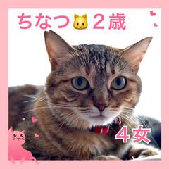 ねこむすめ/うちの子/ネコ/🍘/ねこ/猫 うちの子❤️ちなつ❤️2歳❤️元お外のね…