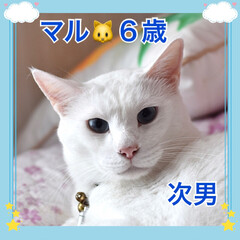 ねこむすこ/うちの子/ネコ/🍘/ねこ/猫 うちの子❤️マル❤️6歳❤️元お外のねこ…
