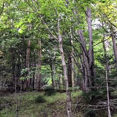 秋の林/お出かけ/風景 どうしても行動範囲が限られて こもりがち…