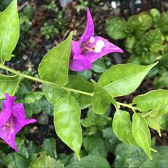 風景/雨/野の花 雨に濡れて一層鮮やかな野の花  じめっと…(1枚目)