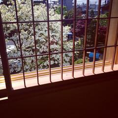 造作建具/木製建具/部屋作り(部屋づくり)/部屋作り ハナミズキの咲く頃。 開口部を通して見え…