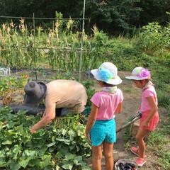 自然/夏休み〜〜 おばあちゃんちで 畑の作業🍠🍅🥒🍆 あっ…