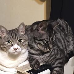 猫が居る暮らし/親子猫/猫/暮らし 温風ヒーターの上で寄り添う親子🐱