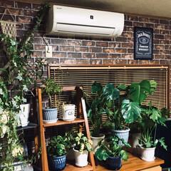 リミアな暮らし/DIY/雑貨/ハンドメイド/住まい/ニトリ/... ニトリの壁紙シールを貼りました。 観葉植…