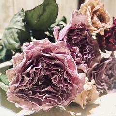 日々の癒し/ドライフラワーのある暮らし/薔薇/ドライフラワー/雑貨/暮らし ドライフラワーになった薔薇も大好きです⸜…