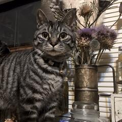 癒し/ペット/猫/リミアの冬暮らし/暮らし 私の日々の癒し…… ソラです。  今日は…
