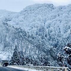 雪景色/お正月2020/おでかけ 今日は寒い日でした。 友達と蕎麦を食べに…