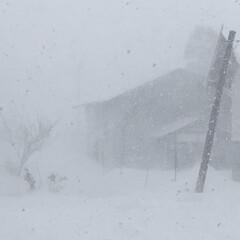 ホワイトアウト/吹雪/冬/風景 今朝の子供の送迎は怖かった…… そこらじ…