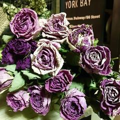 やめられないこと/ドライフラワーのある暮らし/薔薇/薔薇ドライフラワー 薔薇ばかり干してます。 買って直ぐに干す…
