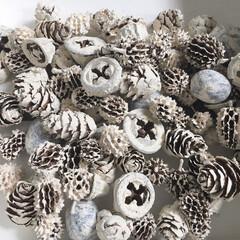 クリスマスリースの準備/木の実ペイント/木の実/セリア/100均/雑貨/... 木の実のペイントは、ジップロックに水性ペ…
