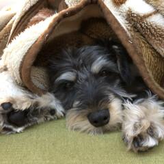 毛布/ペット この毛布大好き! くるまれて眠れるなんて…