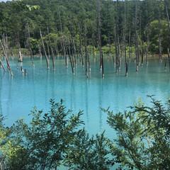 観光/自然/ドライブ/旅行/青い池/北海道/... 北海道の青い池