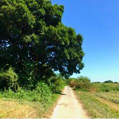 写真/アイス/榎本牧場/130キロ/サイクリング/グルメ/... 1泊2日で、自転車130キロの旅に行って…