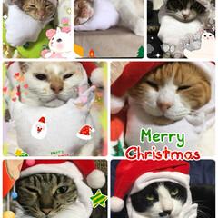 猫/にゃんこ同好会/クリスマス 🎄 MerryX'mas 🎅小さなサンタ…