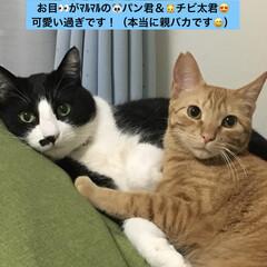 フォロー大歓迎/猫/にゃんこ同好会/うちの子ベストショット