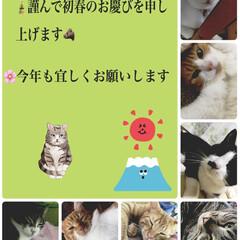 あけおめ/猫/にゃんこ同好会