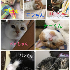 猫/にゃんこ同好会/DIY/セリア/ニトリ/収納 保護ネコちゃん3匹! 皆んな家族だよ!皆…