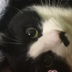 2018/ペット/猫/にゃんこ同好会 2018を代表する大事件を起こした🐼パン…