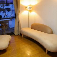 不動産・住宅/SOFA/フリーホームソファ 窓から覗く雪景色とは対照的に、室内は暖か…
