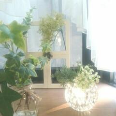 出窓/グリーン/ダイソー/インテリア ダイソーのガラスの器です。 カットが綺麗…