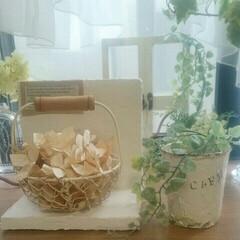 出窓/ペーパーフラワー/グリーン/ハンドメイド ペーパーの花びらを作りました😊