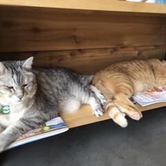 LIMIAペット同好会/猫 春ですか キツくないんですか