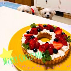 わんこのご飯/わんこのケーキ/ベリータルトケーキ/クリスマスケーキ/クリスマス2019/ハンドメイド/... Merry Christmas♪ 今年は…