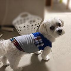 犬服/リメイク/子供服からのリメイク/マルチーズ/ファッション/ペット/... 子供服からのリメイク♡ Tシャツからカラ…
