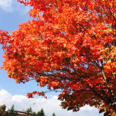 軽井沢/紅葉/秋/風景 軽井沢の秋🍁  紅葉がとても綺麗✨