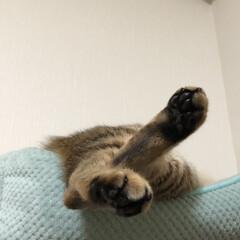 おやすみショット 今日も自由です!