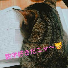 暮らし  おはようございます(*^^*)  令和…