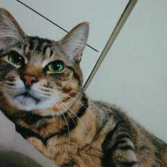 猫派/フォロー大歓迎/LIMIAファンクラブ/至福のひととき なかなか(ΦωΦ)のフォト 可愛いのが撮…