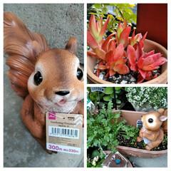 ガーデニング/花のある暮らし/ガーデン雑貨/ガーデニング雑貨/LIMIAガーデニング部/うちのガーデニング/...  こんにちは(*^^*)  この2日ほど…(1枚目)