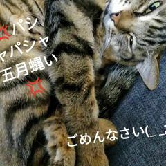 猫と暮らす/暮らし  おはようございます(*^^*)  たま…(2枚目)
